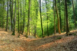 forest-2078301_960_720