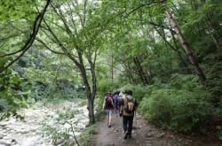 [강원][설악산생태탐방원]설악산 계곡따라 힐링여행(오전)
