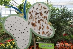 함평 나비대축제