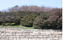 삼인리 동백나무숲(선운사)
