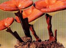 만수리 영지버섯 재배장