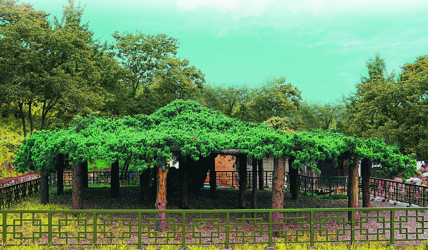 봉산향나무