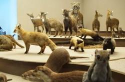 국립생물자연관