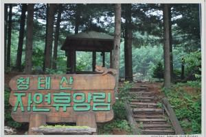 097-체육-청태산 자연휴양림