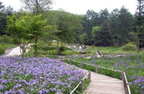 유명산자연휴양림