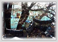 태화이팝나무