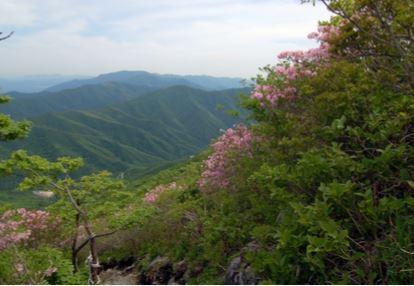 가지산 철쭉나무군락 (천연기념물  제462호)