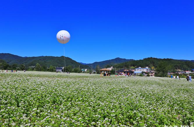 봉평메밀꽃마을.PNG