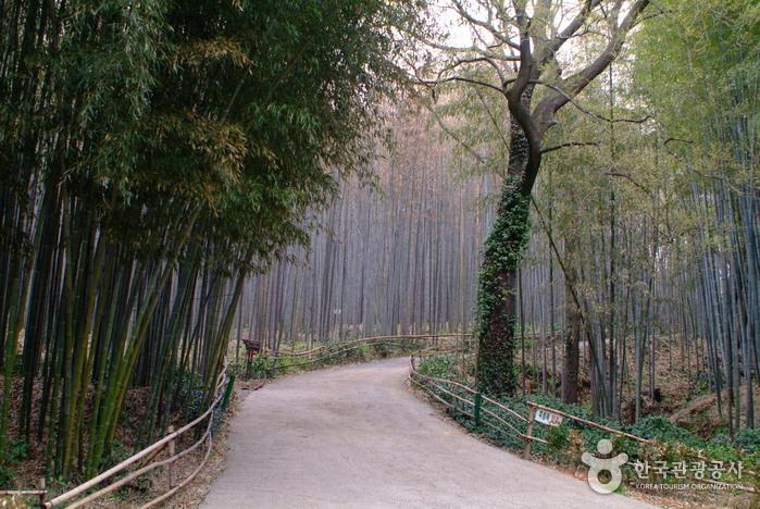 대나무골 테마공원