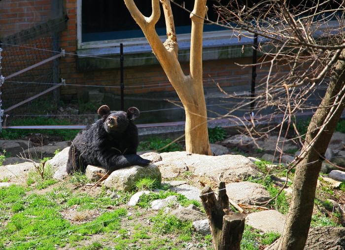 반달가슴곰 생태체험