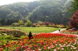 아침고요수목원 봄꽃축제