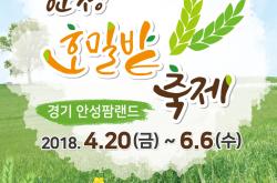 안성 호밀밭 축제
