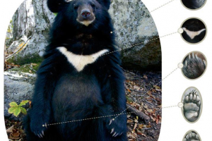 bear_img00