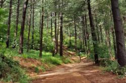 국립백두대간수목원