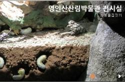 영인산산림_전시