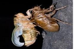사본 -한여름 밤의 곤충 이야기 웹자보 이미지001