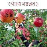 [전남] [무창녹색농촌체험마을] 사과나무 분양 체험행사