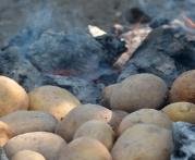 [경북][영덕복숭아마을] 영덕 감자 산곶 체험