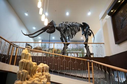 덕소자연사박물관
