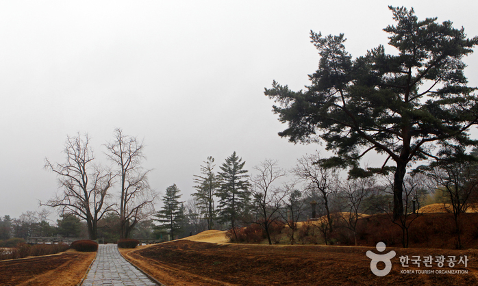 아산시 국화전시회