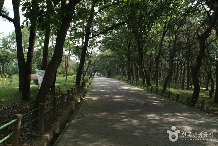 충주 탄금대와 탄금대공원