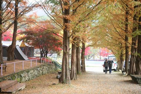 양평오토캠핑장(구 양평관광농원)