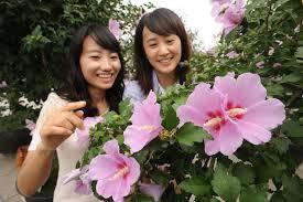 홍천 나라꽃 무궁화축제
